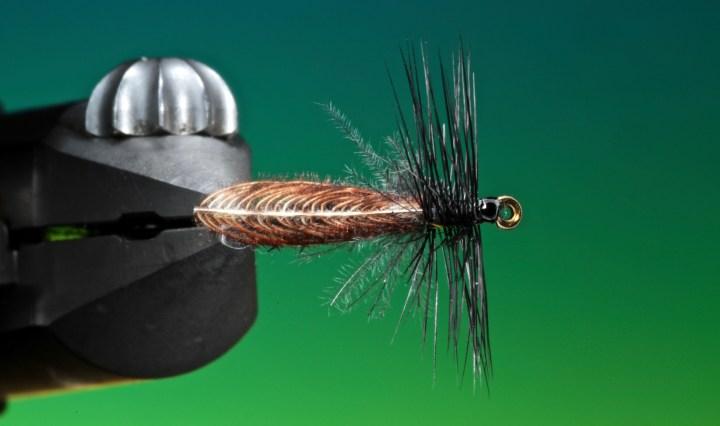 Wonder wing stonefly