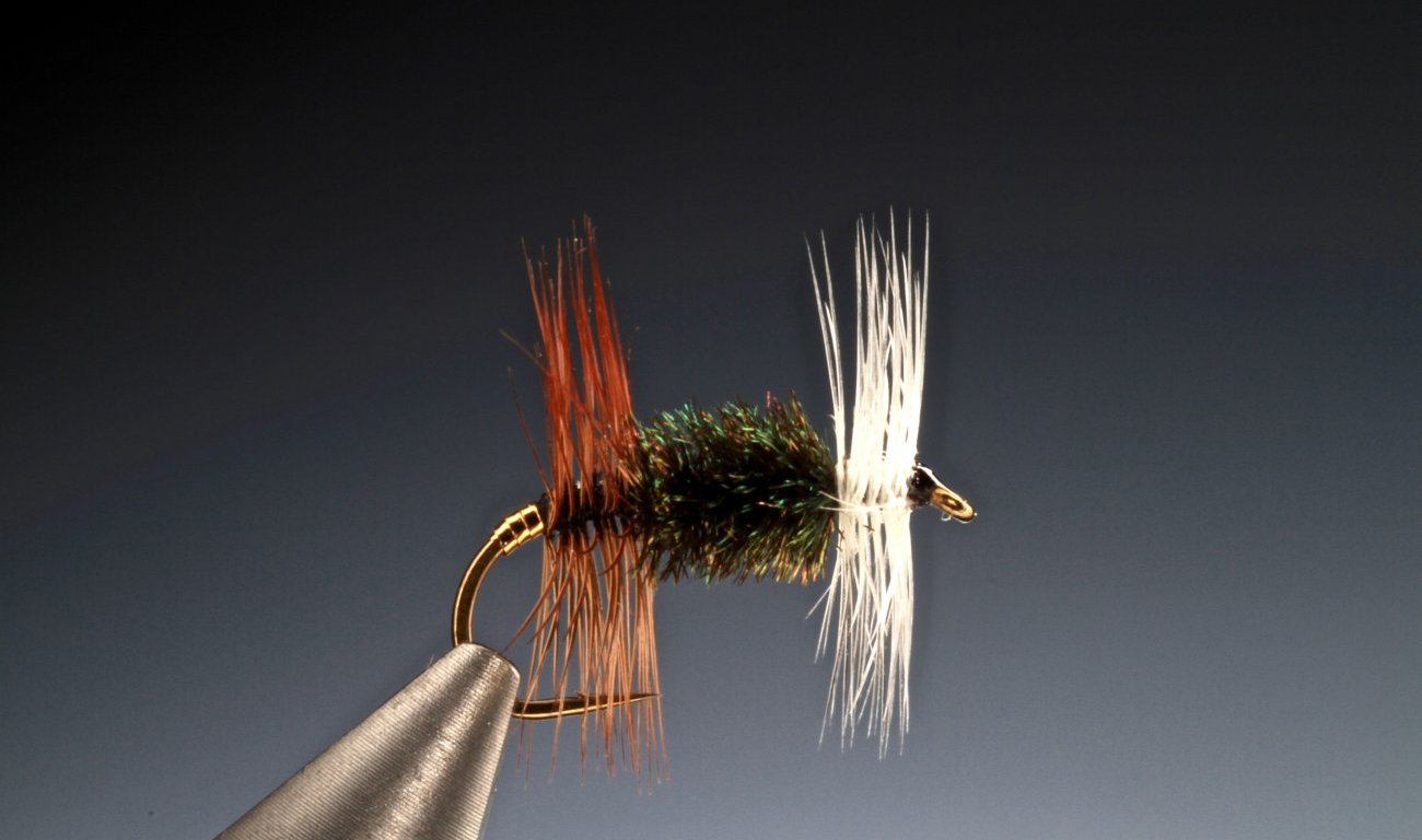 fly tying The Renegade dry fly