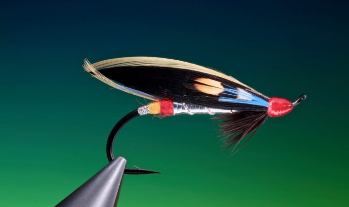 fly tying Nighthawk feather wing