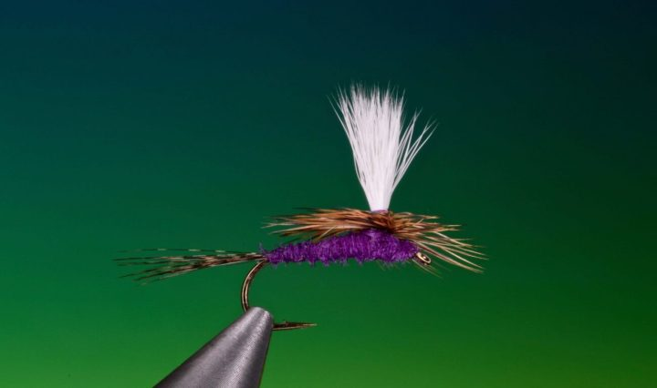 purple haze fly tied by Barry Ord Clarke