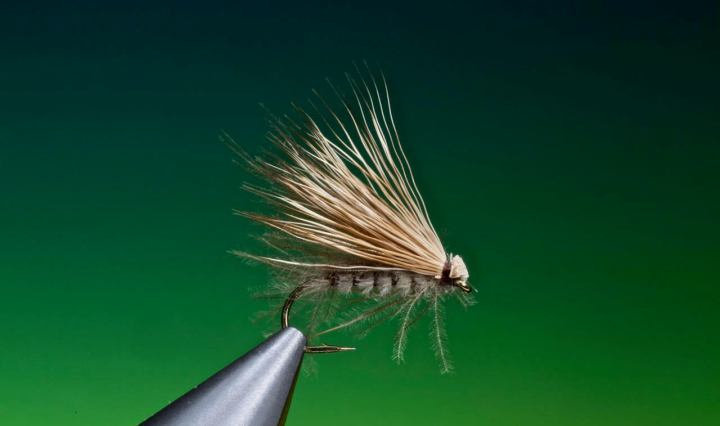 PDQ caddis tied by Barry Ord Clarke