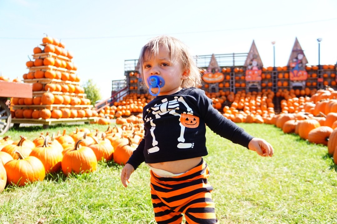 The Great Pumpkin Farm