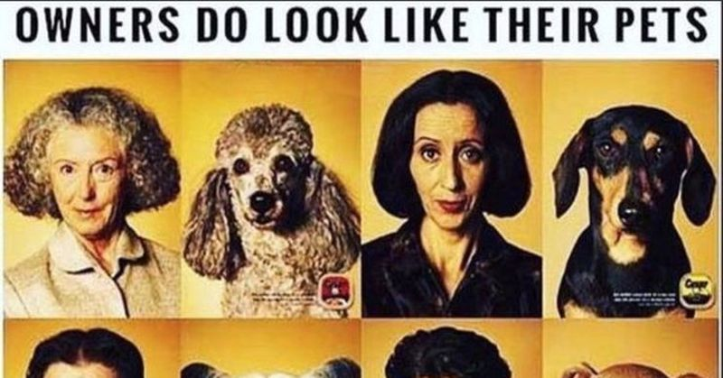HILARIOUS Meme Shows 6 Owners Who Look Exactly Like Their
