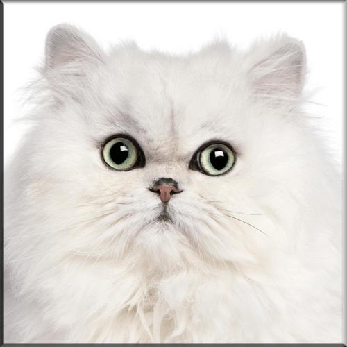 Home - The Feline Fancier Referral List