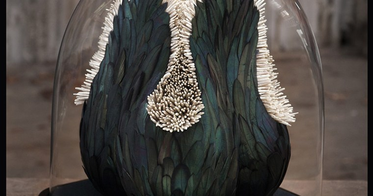Kate MccGwire Feather Sculptures