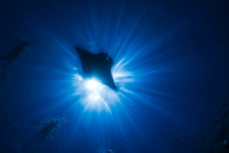13 Amazing Wildlife Encounters in the Ocean from Different Parts of the World
