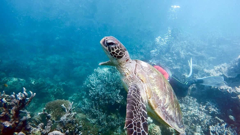 Amy | OutChasingStars, Ningaloo Reef, Australia