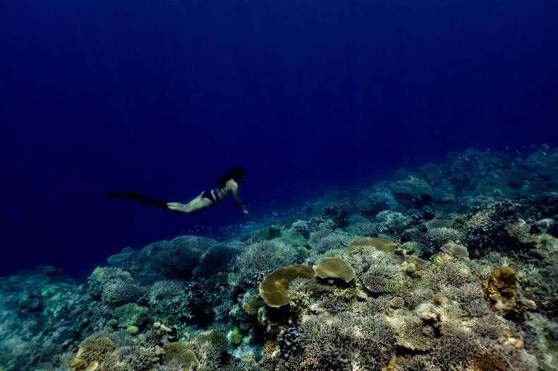 Freediving Gear List for Any Levels