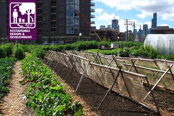 Chicago Urban Farm