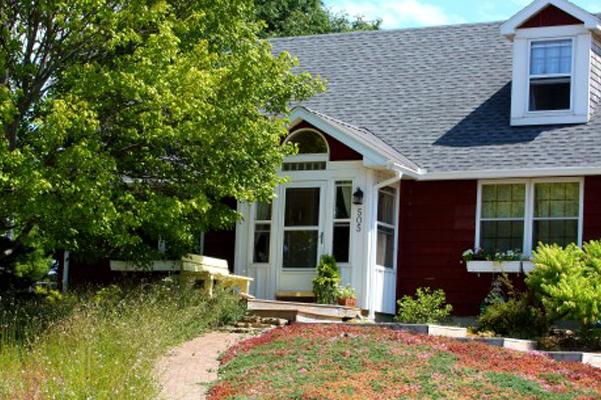 This urban homeowner chose a sumac shrub, low, colorful sedum and wild daisies as alternatives to Kentucky bluegrass.