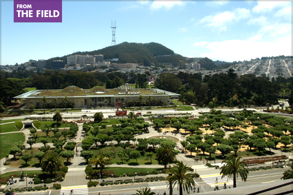 The Music Concourse in San Francisco's Golden Gate Park, home of the California Academy of Sciences and the de Young Museum image: Alexandra Hay