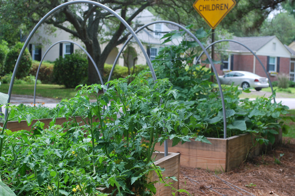 Verge gardens, like this one in Charleston, SC, can be used for planting a garden in your frontyard image: Bill Eubanks