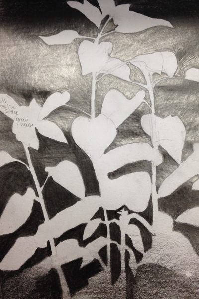 Field sketch, negative space image: Jules Bruck