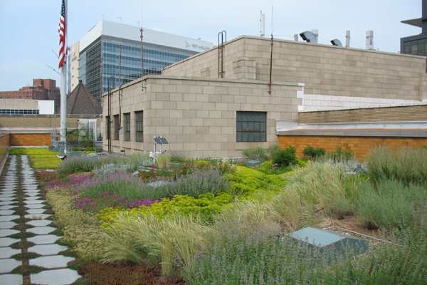Semi-intensive green roof image: John K. Buck, Civil & Environmental Consultants, Inc.