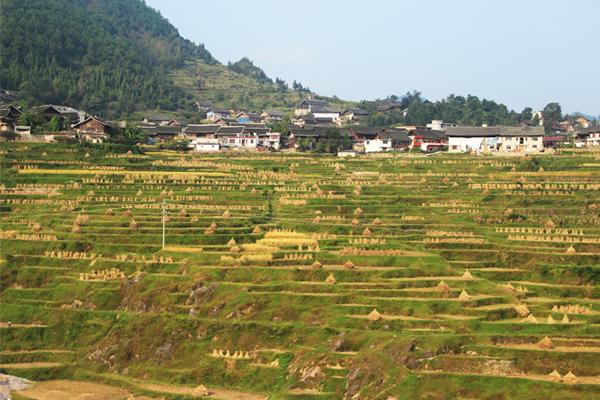 Terraced field in the harvest season, Qiandongnan, Guizhou Province.  image: Minjie Si, X-SCAPE Associates