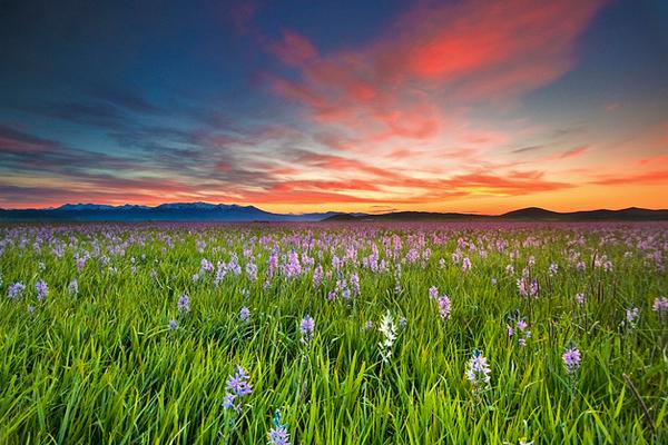 Sunrise at Camas Prairie Centennial Park near Hill City, Idaho image: Charles Knowles via Flickr