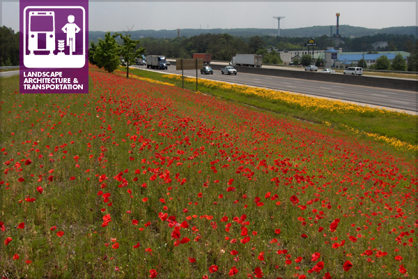 A wildflower plot with corn poppies and lanceleaf coreopsis on Interstate 20 in Georgia image: Davie Biagi