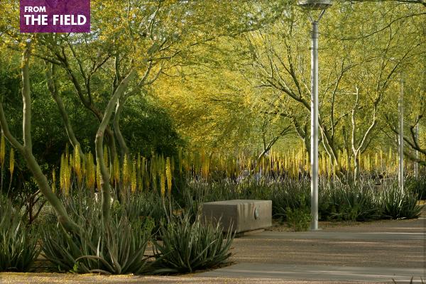The Biodesign Institute at Arizona State University, Tempe, AZ, 2009 Professional ASLA Honor Award, General Design Category image: Terry Moore, 2008