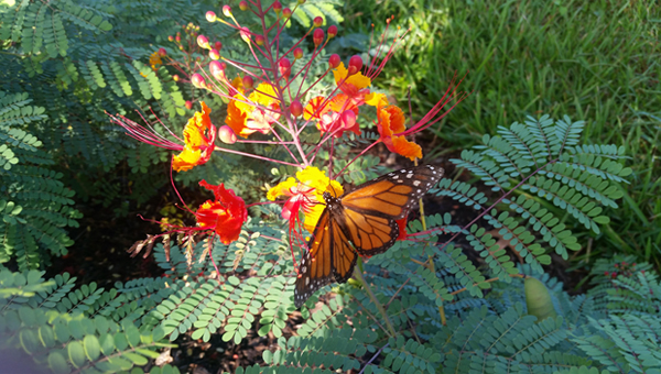 Native plantings in Memorial Park / image: Memorial Park Conservancy
