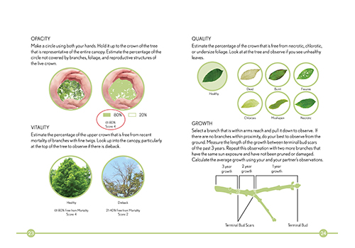 Tree assessment as described in the draft protocol Photo credit: