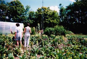 Organic Garden. Image Source: Peter Blanchard, Flickr, Creative Commons