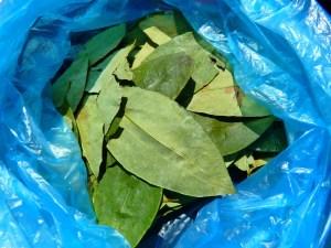coca-leaves-43289_1280