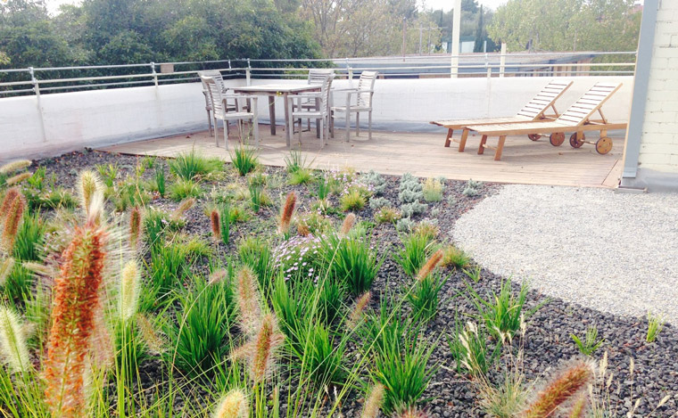 The completed green roof
