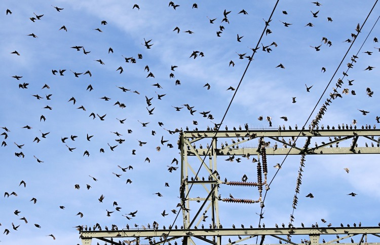 birds sitting power line