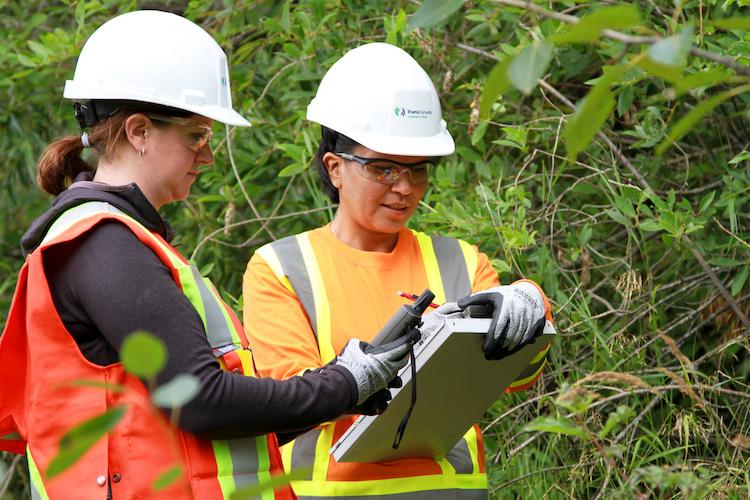 environmental officer assessing