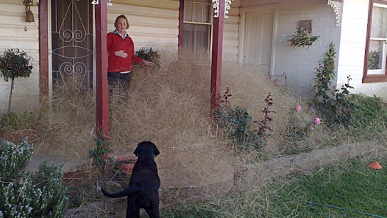 hair panic weed Wangaratta