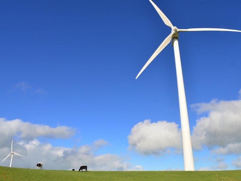 Geelong wind farm