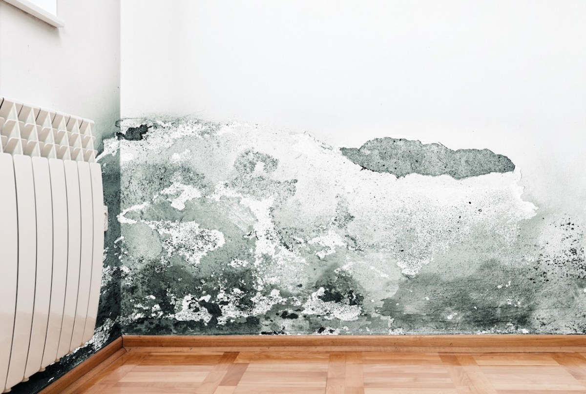 Parliamentary report on mould hands down its finding, but there are sceptics