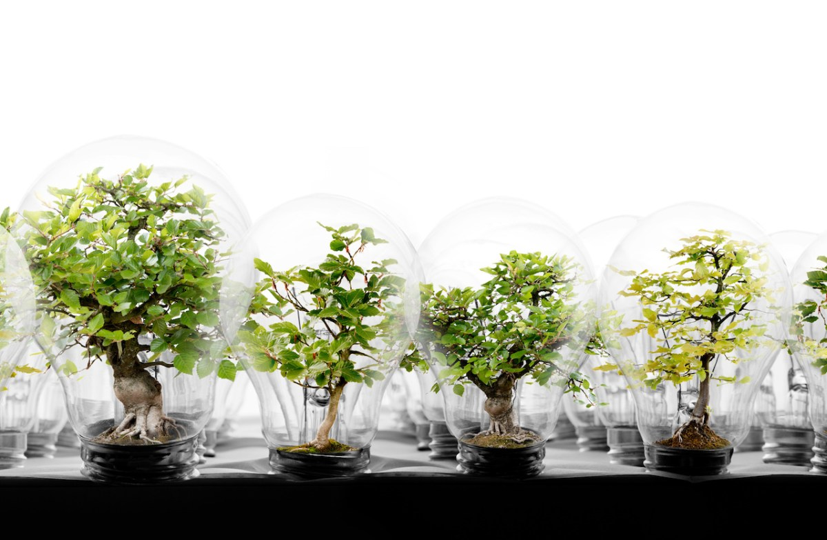 light bulb row with trees finance data sustainable development goals