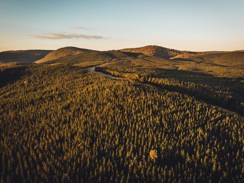 forest trees aerial