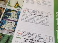 Cucumber Mini White