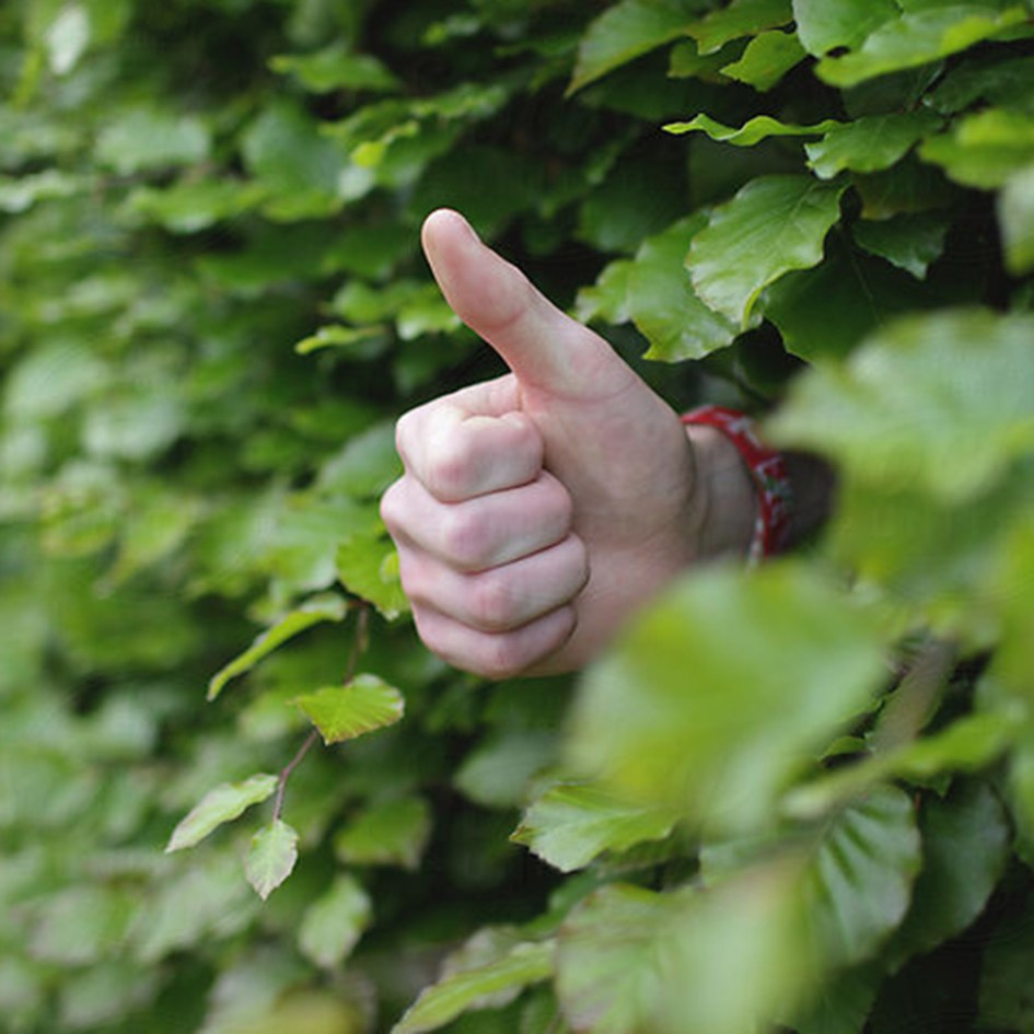 a thumbs up from behind a hedge