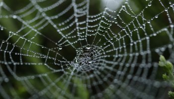 Picture of a web to symbolise scamming