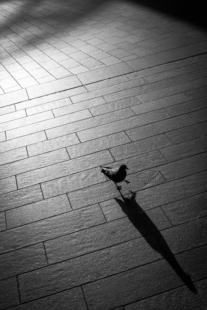 Pidgeon | Liverpool Photo Walk 2015