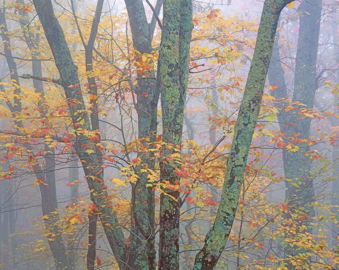 Blue Ridge Autumn #5