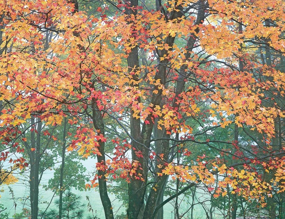 Blue Ridge Autumn #8