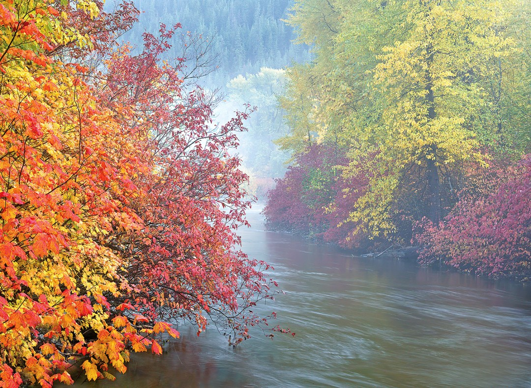 Misty Autumn Creek