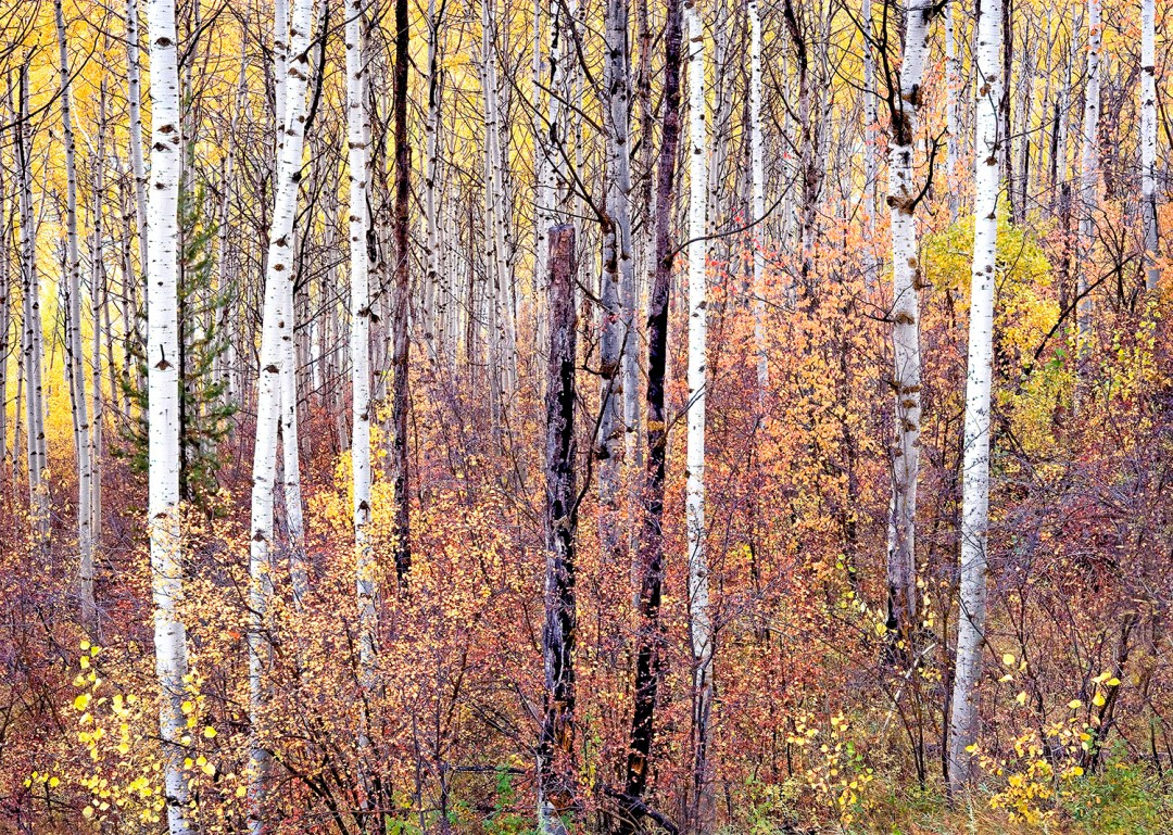 Swan Valley Autumn Portrait #1