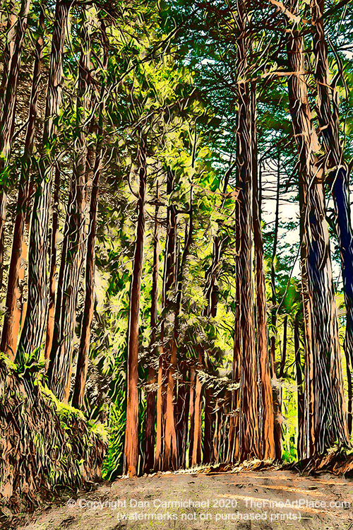 Redwood trees - a unique painting created from a photo