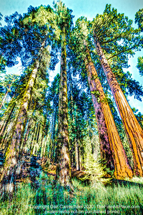 Redwood trees - the majestic giants of the west.