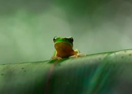 Tamborine National Park, Queensland, frog, wildlife, Danielle Lancaster