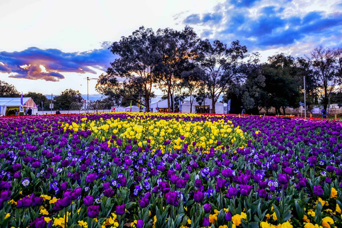 Canberra, Floriade, flower festival, pop culture, ACT, Visit Canberra