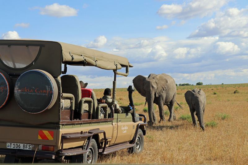 elephants, Nasikia Camps, Maasai Wanderings, Serengeti National Park, Serengeti, Africa, Tanzania, on safari
