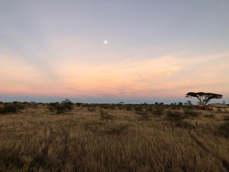 Serengeti, Tanzania, Ehlane Plains, Nasikia