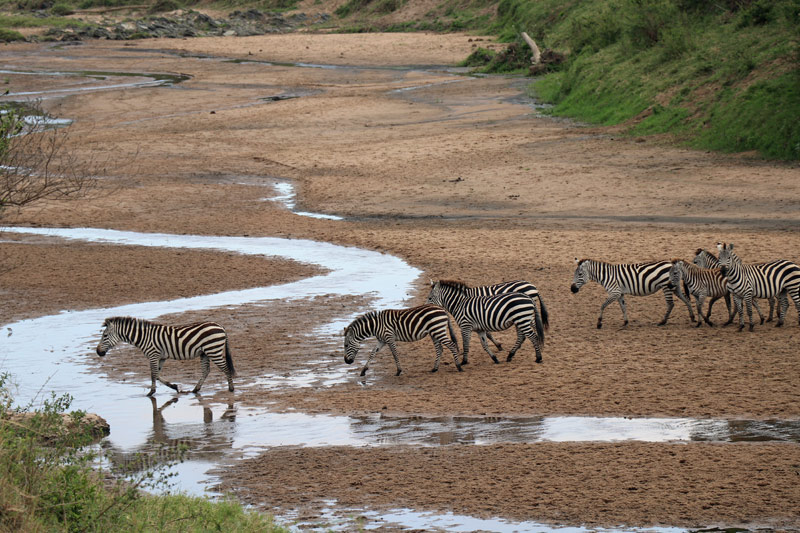 Serengeti, Maasai Wanderings, Nasikia Camps