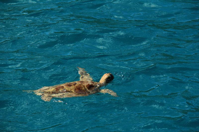 Turtle, Seychelles, Anse Lazio, Sunsail, yacht charter